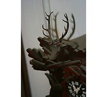 Cuckoo Stag Photographic Print