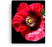 Red Opium Poppy Canvas Print