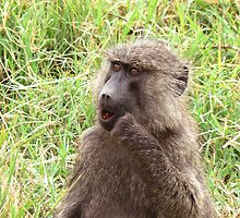 wild baboon by AngelaFoster