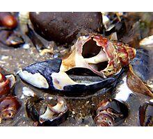 shell caverns ... Photographic Print