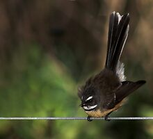 Bird on a Wire by Robyn Carter