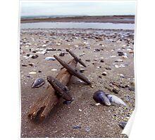 driftwood ... Poster