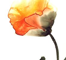 Poppy by Thelma by ClancyWeston