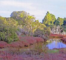 Toby's Inlet, Quindalup, near Dunsborough, Western Australia by Maureen Smith