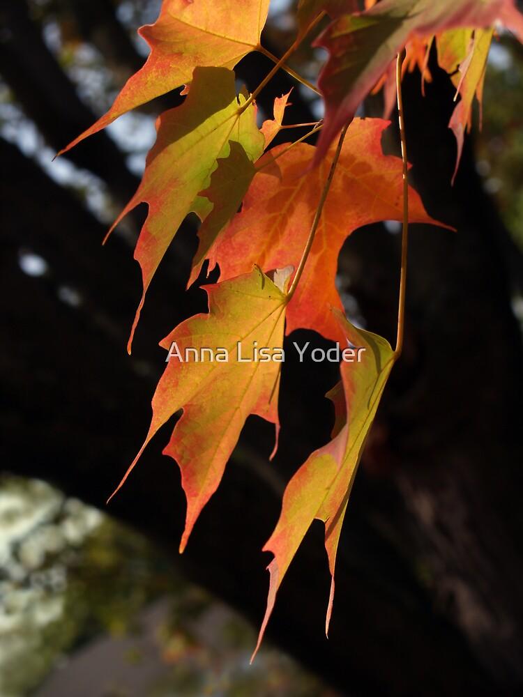 Sugar Maple Leaves, Back-lit by Anna Lisa Yoder