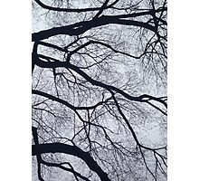 Trees and Sky Pt. 2 Photographic Print