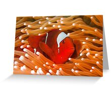 Red-Hot Greeting Card