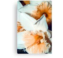 Tangarine Ruffles Canvas Print
