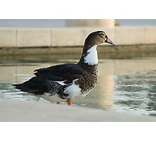 Thinking Duck Photographic Print