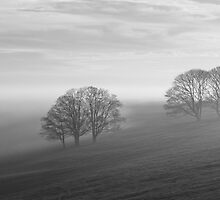 Trees in the Mist - Monochrome by Steve Churchill