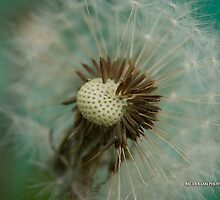 Teal Dandelion Fluff by nituathaill