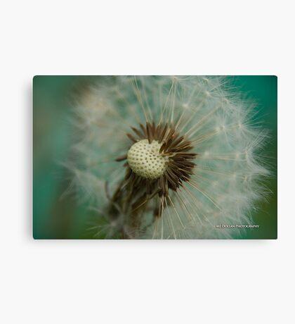 Teal Dandelion Fluff Canvas Print