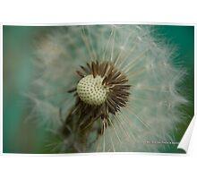 Teal Dandelion Fluff Poster