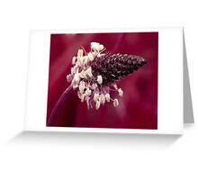 pinkypurple ... Greeting Card