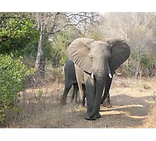 Elephant in Sabi Sabi, South Africa Photographic Print
