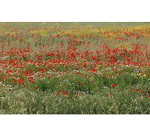 Poppies' field Photographic Print