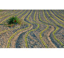 Worked land Photographic Print