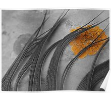 Feather and Lichen Poster