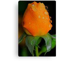 Poppin Peach Canvas Print