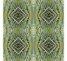 Tesselated nature Photographic Print