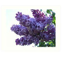 Lilac Bundle Art Print