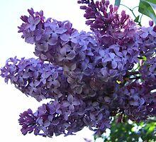 Lilac Bundle by Tammy F