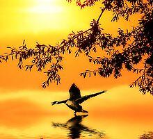 Sunset Lake 2 by Wendy Mogul