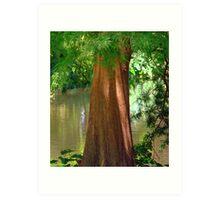 Cypress Tree Art Print