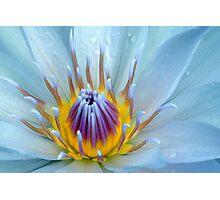 Natures Wonder Photographic Print