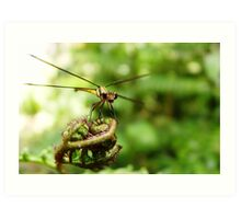 Dragon Fly II Art Print
