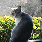 Kat Cat by Navigator