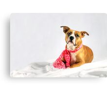 Fifty Shades of Pink Canvas Print