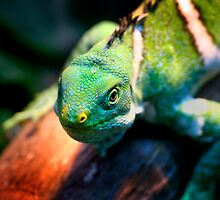 Green and mean! by Stanislaw