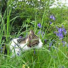 Sweet Smell of Bluebells by Angela Harburn