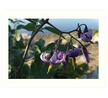 Wildflower Series:  Nightshade by the River Bank (Macro) Art Print