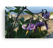 Wildflower Series:  Nightshade by the River Bank (Macro) Canvas Print