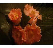 Sultry Camelias Photographic Print
