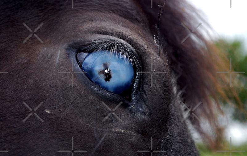 Blind Eye by ApeArt