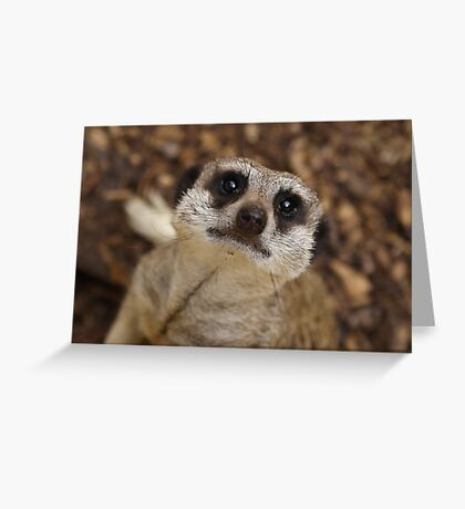 Meerkat Stare Greeting Card