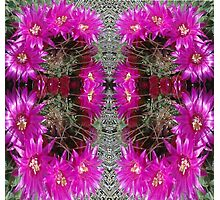 Butterfly of Circled Cactus Photographic Print