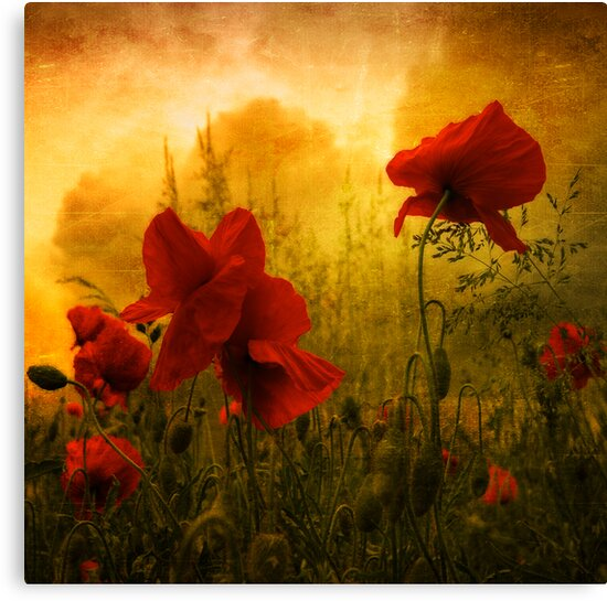 Red for Love by Philippe Sainte-Laudy