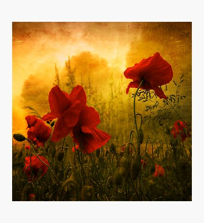 Red for Love Photographic Print