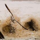 Escape the Surf - Best Viewed Large by Glen Allen