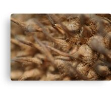 Prickly Ball Close Up Canvas Print