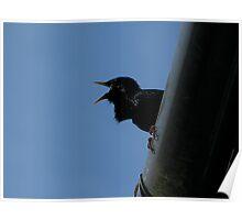 Sweet talking starling Poster