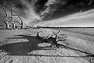 Tree Bones by KathyT