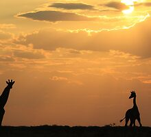 Giraffe Sunset - African Wildlife - Silhouette Pair by LivingWild