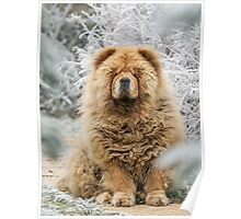 Ms Tea - Chow-Chow Poster