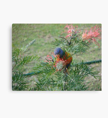 Rainbow Lorikeet & Red Grivellia Canvas Print