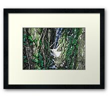 Creeper 2 Framed Print